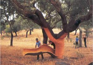 Пробка - кора пробкового дуба