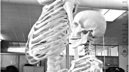 3D printer skeleton_2