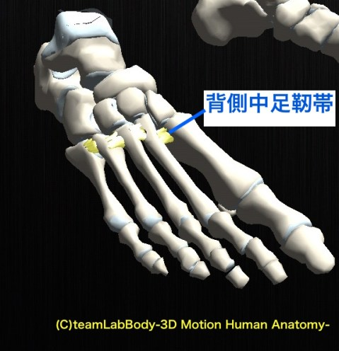 背側中足靭帯