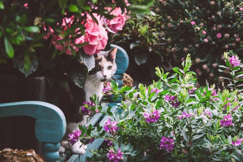 Katze zwischen Blumen
