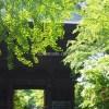 新緑の九品仏浄真寺 修復で順番にお留守にする9体の仏さま