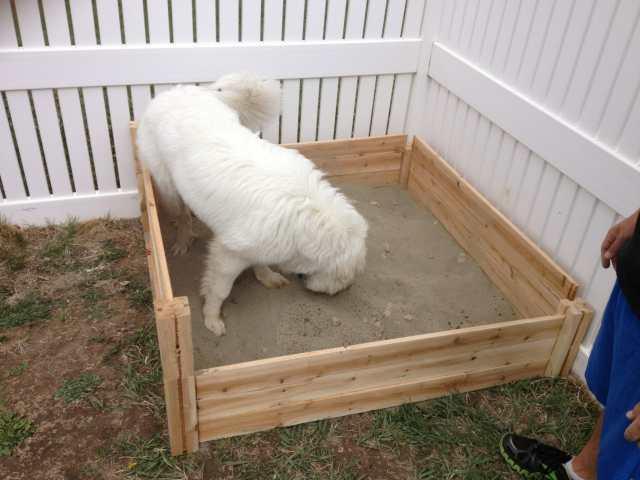 ideas trucos entretener perro en casa jardin