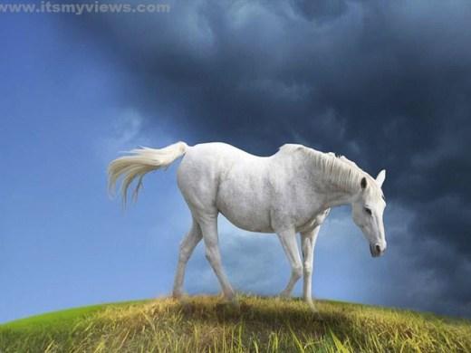 horse-desktop-wallpaper-2012