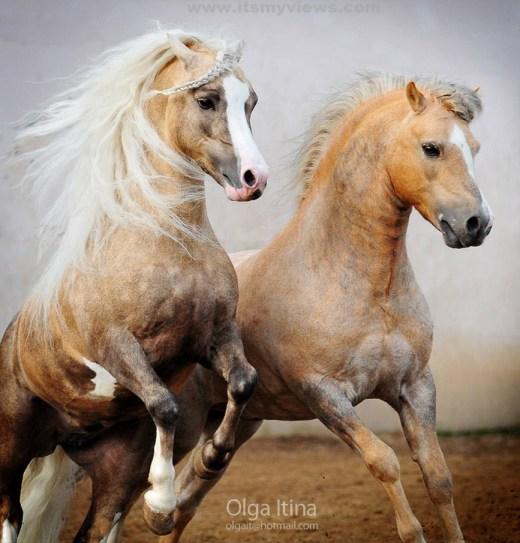 Horse-wallpaper-2012