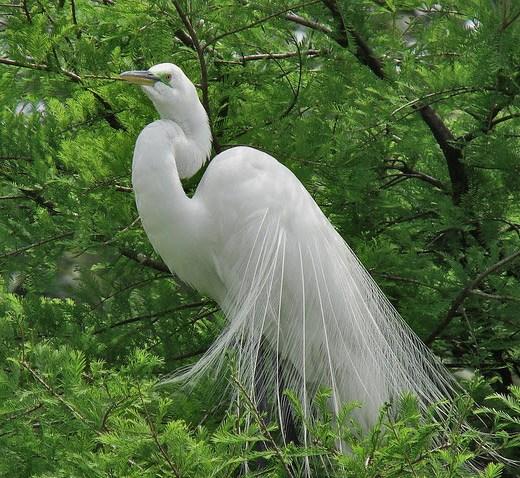 most-beautiful-bird-of-world