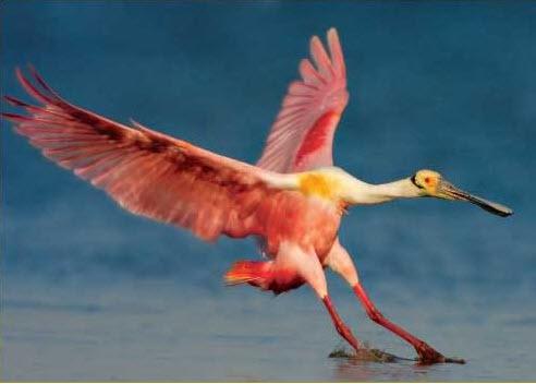 bird-award-winning-world-best-photography-2013