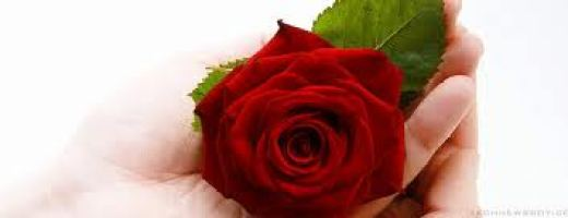 Red-Rose-Romantic picture for facebook share