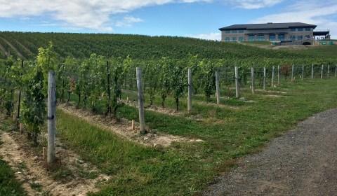 Vines on vines on vines!