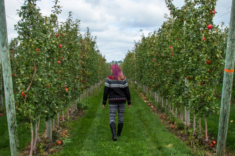I've Been Bit! A Travel Blog :: Grey County Autumn Adventures - Apple Picking T&K Ferri Orchards In the Apple Orchard