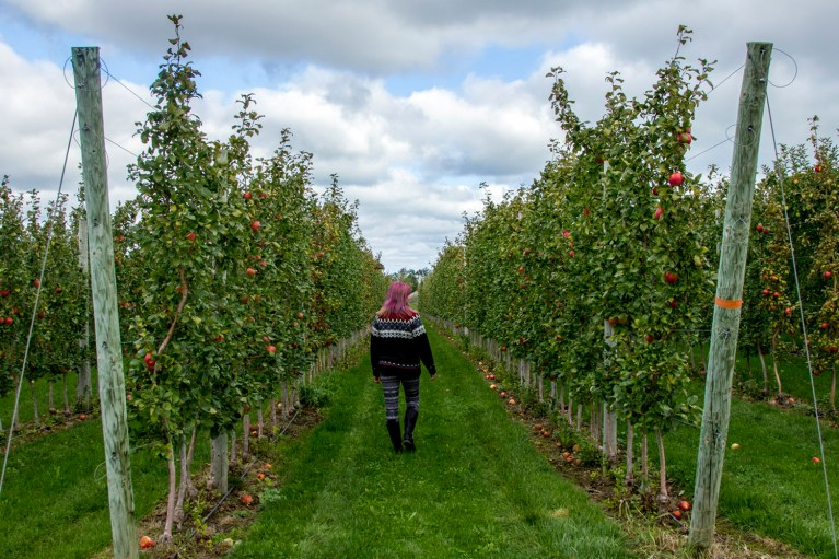 Apple Picking - 2017 Round Up & Travel Recap :: I've Been Bit! A Travel Blog
