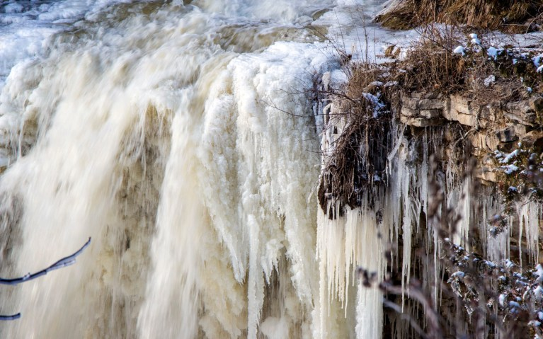 Close Up of Crest - Hiking Hamilton's Borer's Falls :: I've Been Bit! A Travel Blog