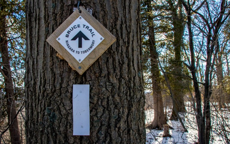 Bruce Trail Blazes along Hiking Hamilton's Borer's Falls :: I've Been Bit! A Travel Blog