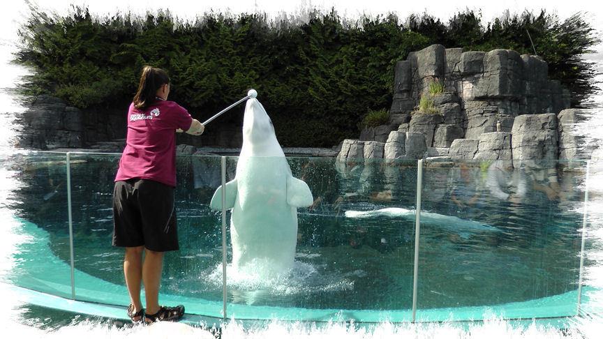 Hier zwemmen onder andere witte dolfijne