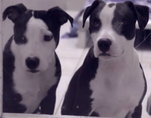 Daily dose of cute: cuddling dogs find new home