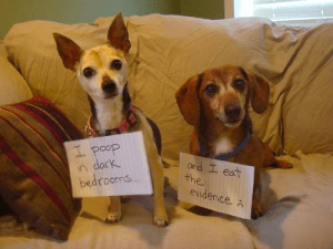 Pet shaming: trust us, it's hilarious