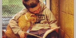 Kids reading to shelter cats is the sweetest thing you'll see today