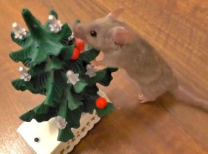 Your daily dose of cute: Mouse decorates Christmas tree. Really.