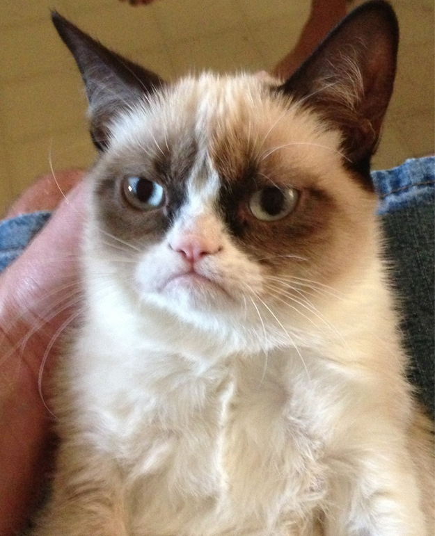 Just try NOT to smile when you see the world's grumpiest cat