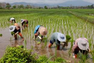 Chiang Rai-0950