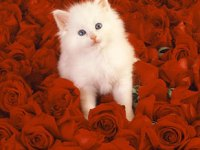 White is bound to stand out among roses ;)