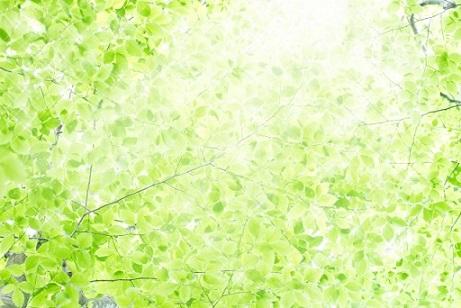 葉っぱ達①