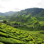 First-Timer's Guide to Traveling in Malaysia
