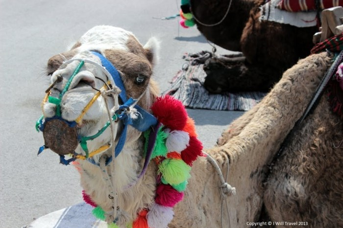 Travel Expectations - A camel in Tunis