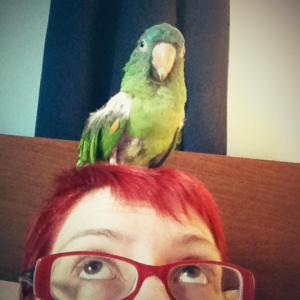 Harold on my head