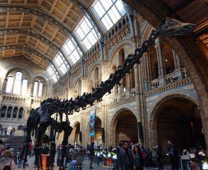dinosaur exhibit at museum in london
