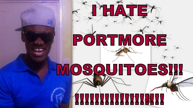 I Hate Portmore MOSQUITOES!!!!! @duttyberryshow