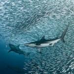 Underwater-Scenes10