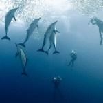 Underwater-Scenes6