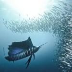 Underwater-Scenes9