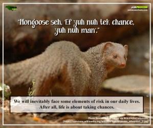 Ja Proverb_Mongoose Seh_FB