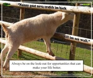 Ja Proverb_Nanny Goat Neva Cratch_FB