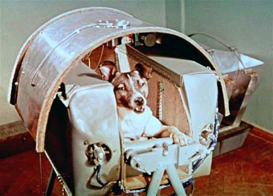 A view of Laika, Nov. 5, 1957, the female dog the Russians say is riding in outer space as a passenger aboard Sputnik II.  The Russians say the name is also the breed of a dog native to the far North, and is related to the larger husky and similar to the spitz or pomeranian.  The Laikas are known for their endurance. (AP Photo/NASA)