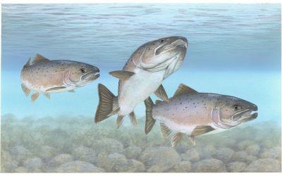Roundup Kills Fish