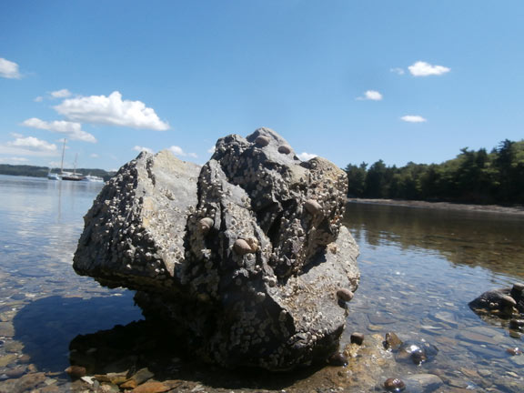 rock_blog