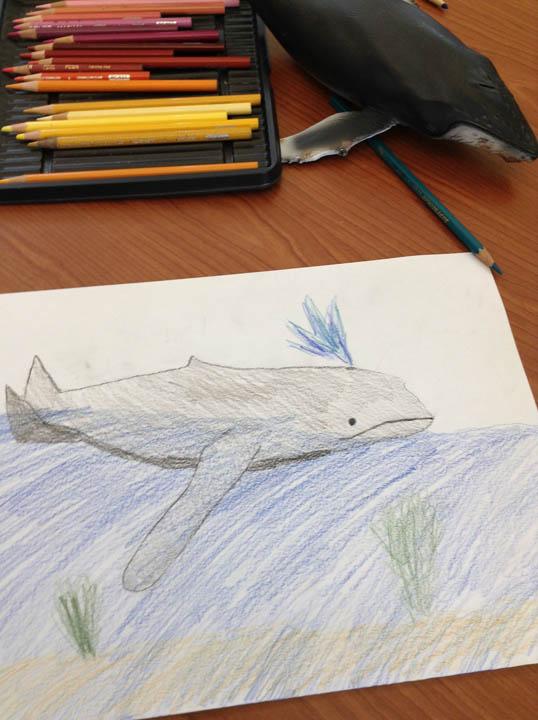 6whales_blog