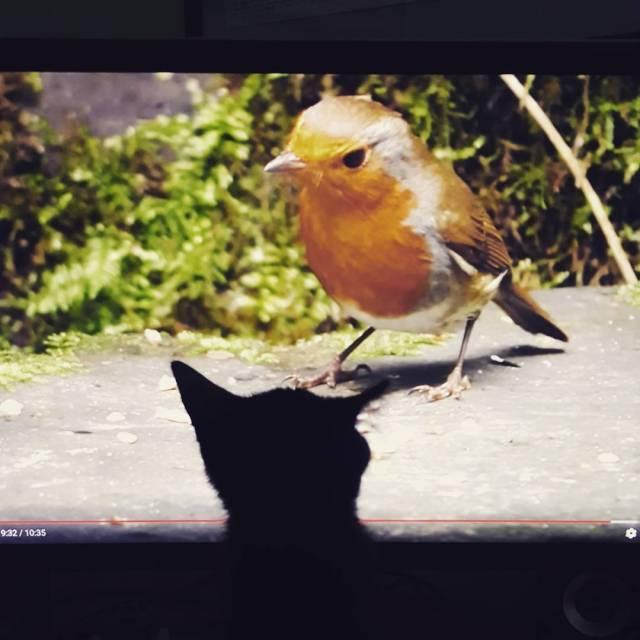 Wiem e to niewychowawcze ale puciam kotu telewizj eby miehellip