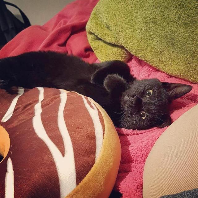Kot spad z pczka ale na szczcie nic mu sihellip