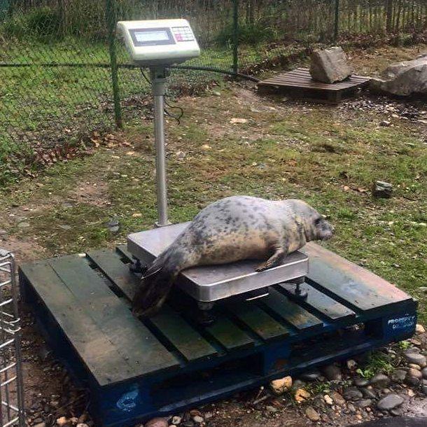Nie popeniajcie bdu tej foki Po niedzielnym obiedzie u babcihellip