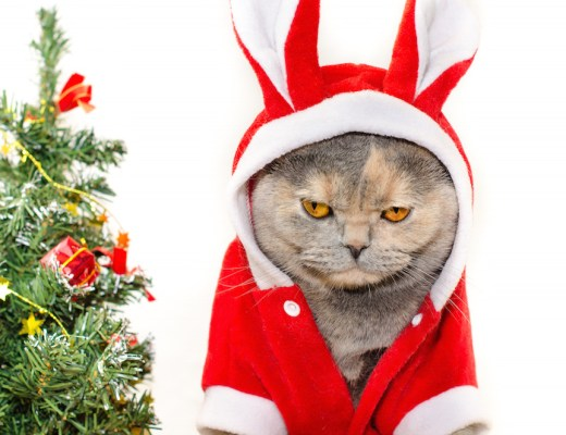 Sad christmas cat dressing up in red rabbit costume