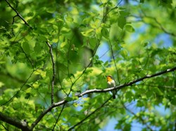 Small Of Bird On A Branch