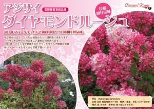 ajisai-daiyamondoru-jyu6