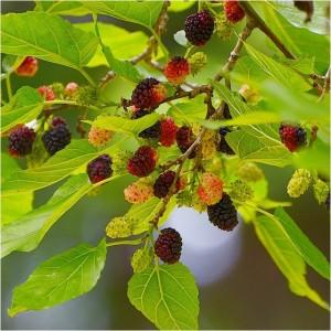 mulberry-endlessbouquet1