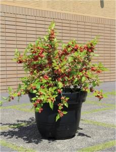 mulberry-endlessbouquet2