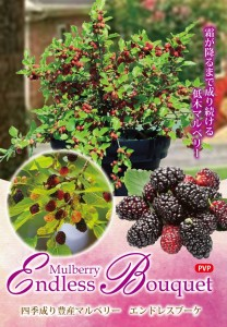 mulberry-endlessbouquet7