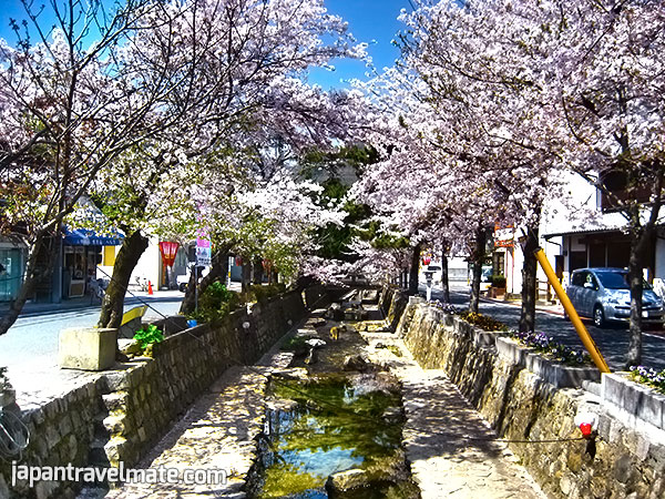 Takahashi, Okayama, Japan. A channel lined with cherry blossoms.