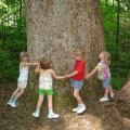 kids-hugging-a-tree